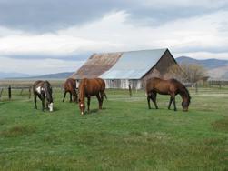horses-barn-1